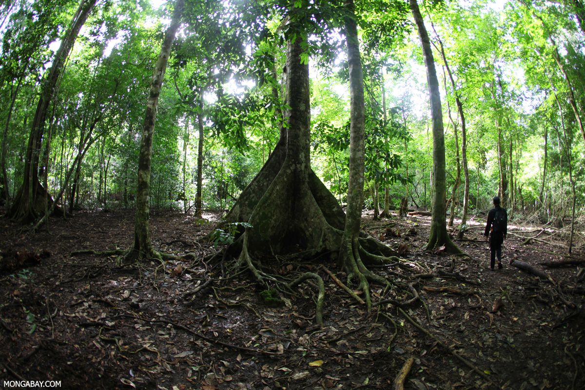 to expect for rainforests in 2017