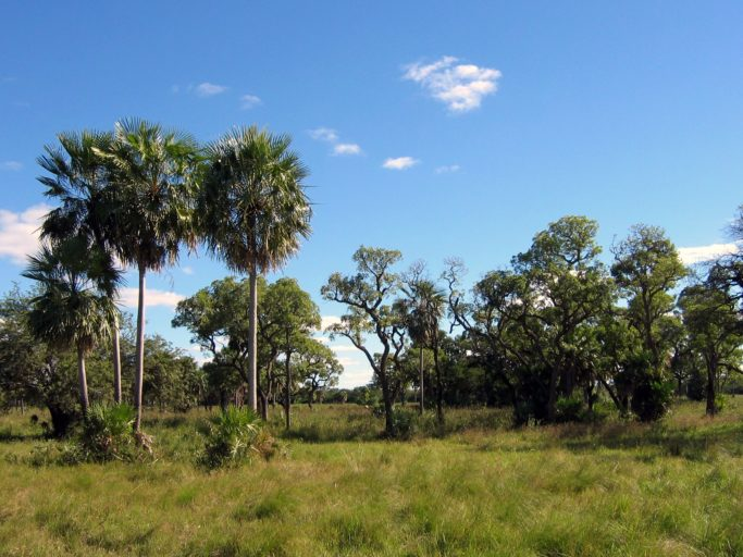 Diverse landscapes characterize the Chaco, pictured here in Paraguay, from grasslands to dry woodlands. Photo by Ilosuna/Wikimedia Commons
