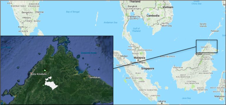 The location of Forest Management Unit 5 in Malaysian Borneo (in white). Map courtesy of Global Forest Watch and Google Earth