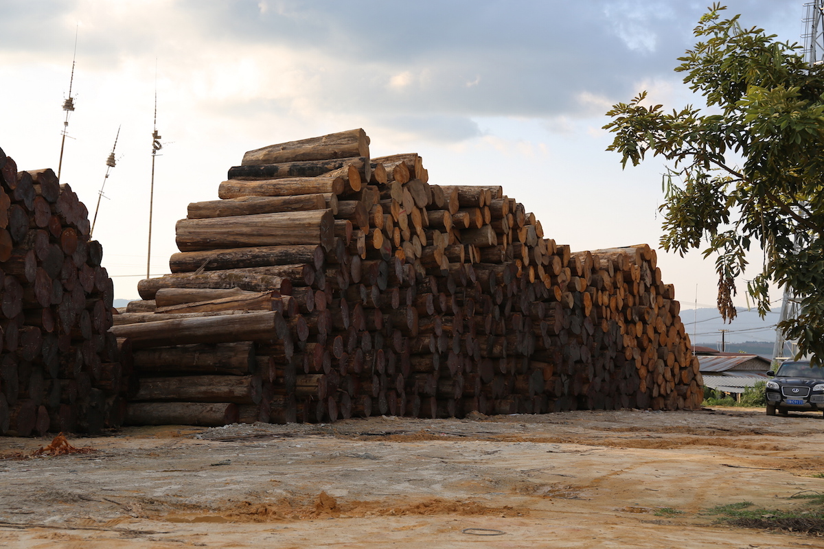 "Stacks of timber along the Myanmar-China border. The darker-hued logs appear to be Burmese padauk, one of the ""replacement"" species now threatened by the 'hongmu"" trade. Photo by Demelza Stokes."