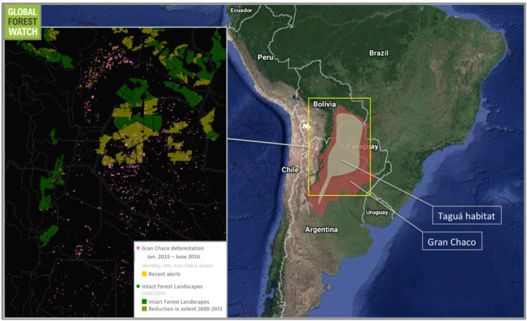 Data from Asociación Guyra Paraguay show Chaco deforestation rates dropping off slightly in 2015, with about a half-percent less forest loss over 2014. Preliminary numbers from the first half of 2016 (June is the latest date for which data are available) indicate a steeper drop, with about a 5 percent reduction in January-June over the same time period in 2015.