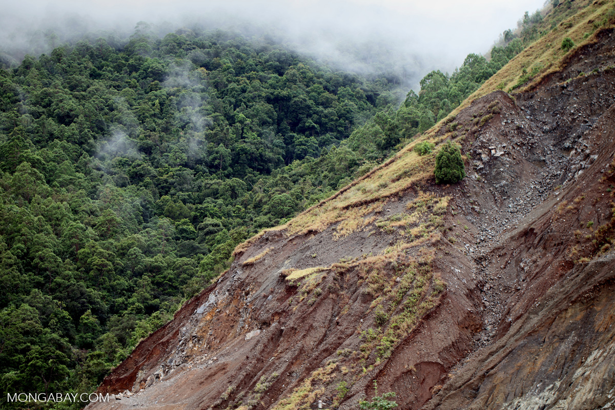 Landslide on a deforested hill near Jayapura in Indonesian Papua. Photo by Rhett A. Butler.