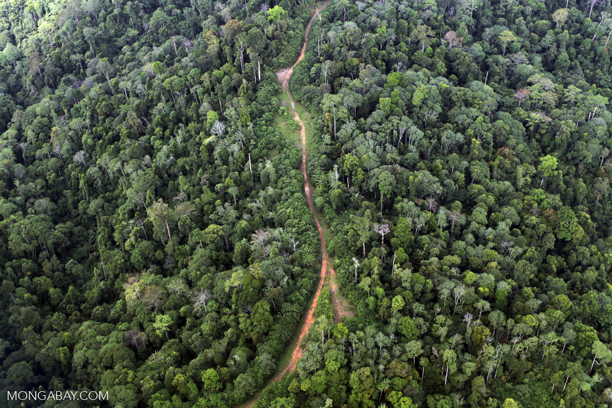 A logging road in Sabah, Malaysian Borneo. Photo by Rhett A. Butler.