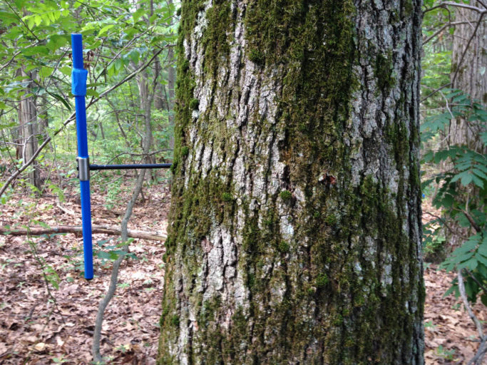 The team compared the widths between the growth rings of trees in the study plots with climate data from 1990 to 2014. Photo by Andrew Reinmann