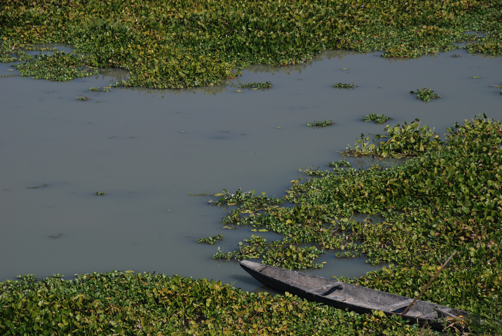 Kaziranga's marshlands and riverine habitats teem with life. Photo by Shashank Gupta/Flickr/CC BY-SA 2.