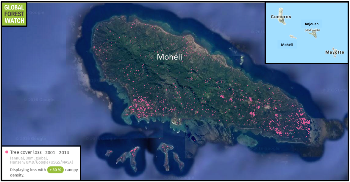 Data from the University of Maryland and visualized on the forest monitoring platform Global Forest Watch show the island of Mohéli lost more than 4 percent of its tree cover between 2001 and 2014. Neighboring Anjoan, the only other place inhabited by the bats, lost nearly 2 percent during the same time period.