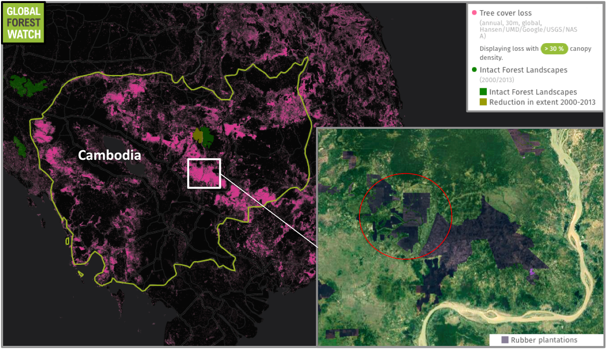 Cambodia lost around 1.59 million hectares of tree cover between 2001 and 2014 – much of it for plantation agriculture like the rubber plantations. Only one small area of intact forest landscape remains in the country, but half of it was degraded between 2000 and 2013. The area circled in the inset shows the area highlighted by NASA's imagery.