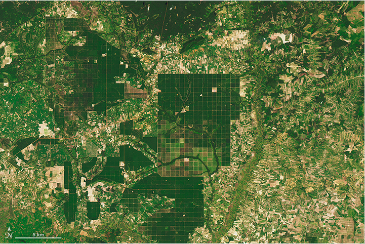 NASA Earth Observatory images by Joshua Stevens, using Landsat data from the U.S. Geological Survey and Global Forest Watch