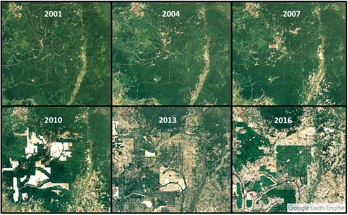 Satellite imagery from Google Earth show rubber plantations and associated deforestation ramping up in the past six years.