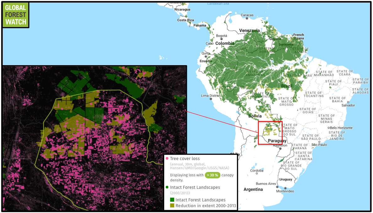 Data from Global Forest Watch show heavy tree cover loss in Paraguay's remaining IFLs; the new study finds that the country lost 80 percent of its IFLs between 2000 and 2013.
