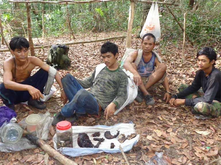 Illegal Siamese rosewood loggers in a makeshift camp pose with the remains of Pileated gibbons. Wildlife rangers in Thap Lan National Park have reported hearing the gibbons' calls less and less in the treetops as their numbers dwindle. Photo courtesy of Thailand's Department of National Parks, Wildlife and Plant Conservation