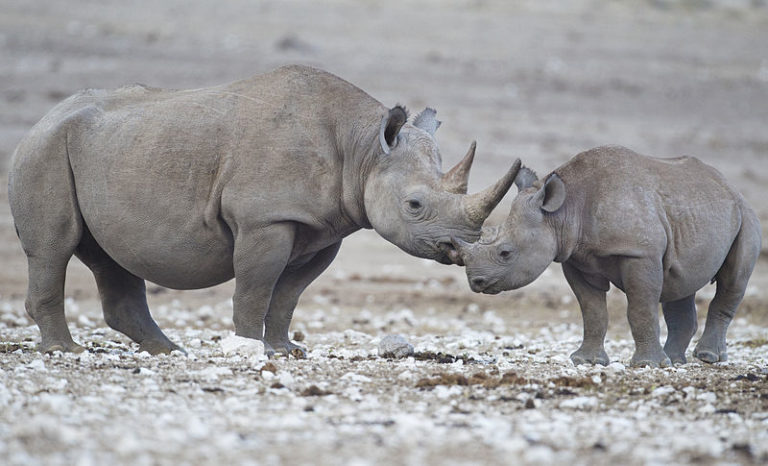 Reducing Asia's hunger for rhino horn