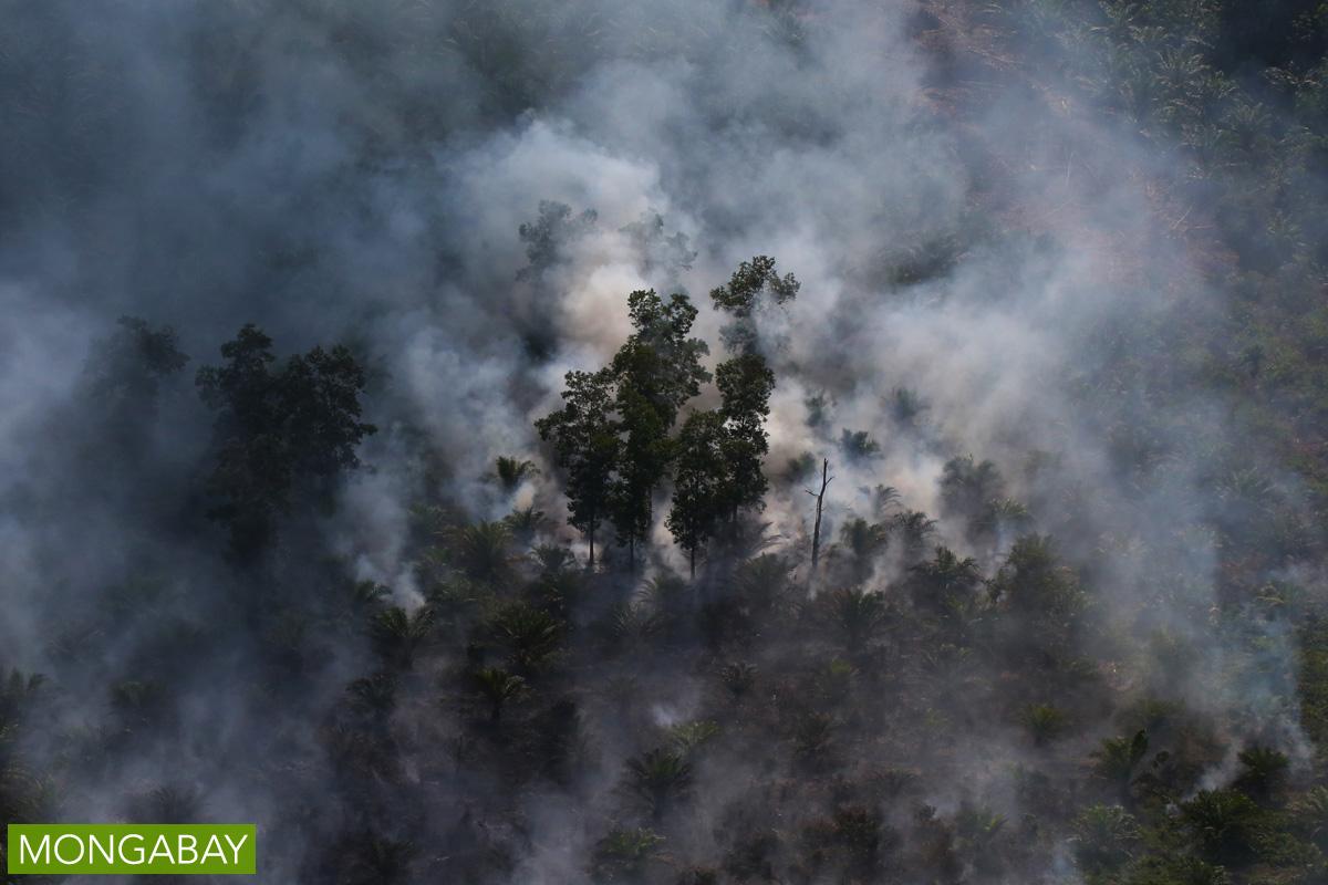 Peat fire in Indonesia. Photo by Rhett A. Butler.