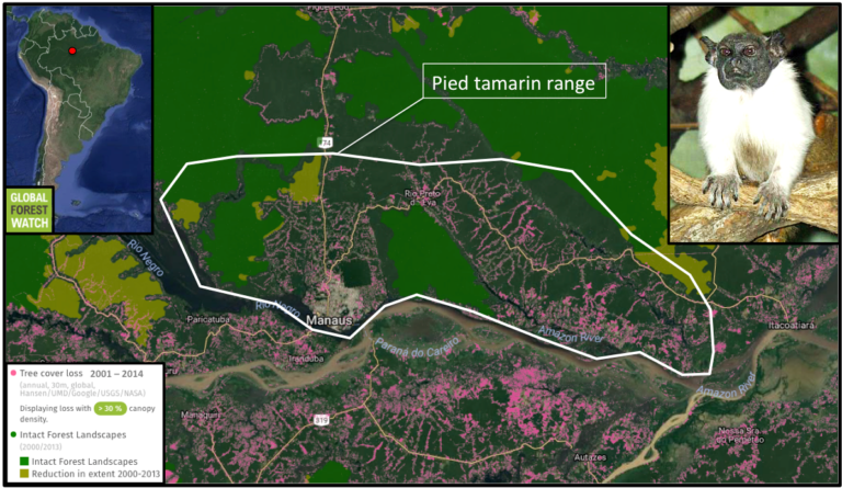 0118-tamarin-range-loss-map