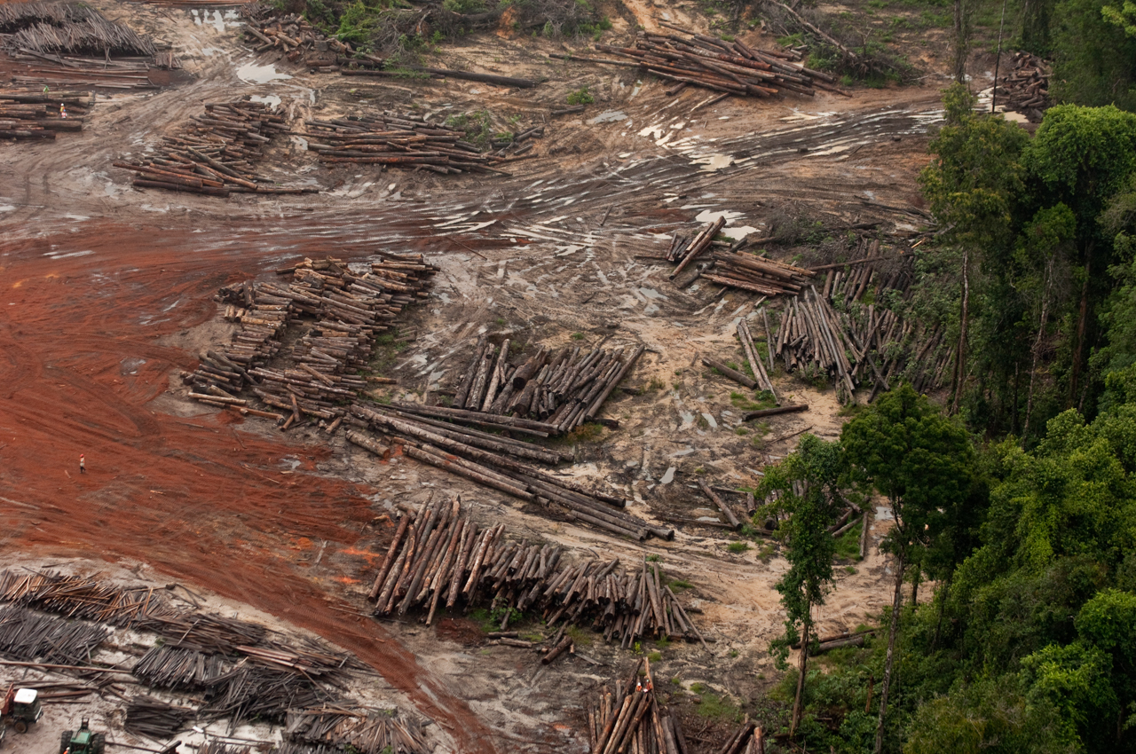 Forestloss Guyana