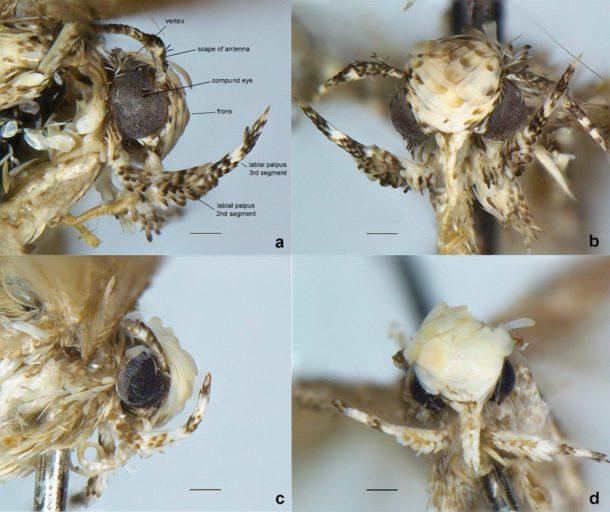 moth19n-1-web