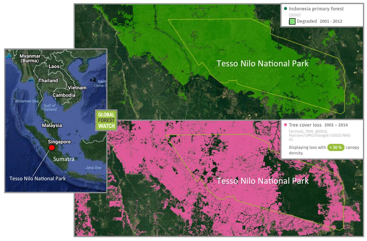 Data satelit menunjukkan, pada tahun 2000, Taman Nasional Tesso Nilo sebagian besar wilayahnya tertutup oleh hutan primer. Namun, antara tahun 2001 dan 2014, sekitar 52.000 hektare lahan telah dibuka.