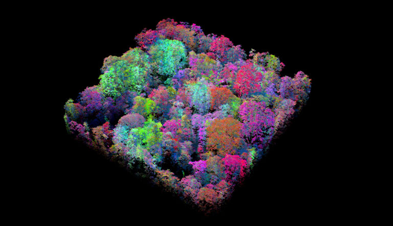 The CAO laser-guided imaging spectrometer data are fully three-dimensional, providing the structure and architecture of the forest, while simultaneously capturing up to 23 chemical properties of the canopy foliage. These colors indicate the diversity of canopy traits among co- existing tree species in the same hectare. Image courtesy of Greg Asner, Carnegie Institution for Science