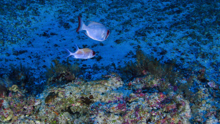 First-ever underwater photos of newly discovered Amazon Reef have surfaced