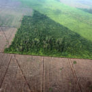 Deforestation for pulp and paper production in Sumatra. Photo by Rhett A. Butler.