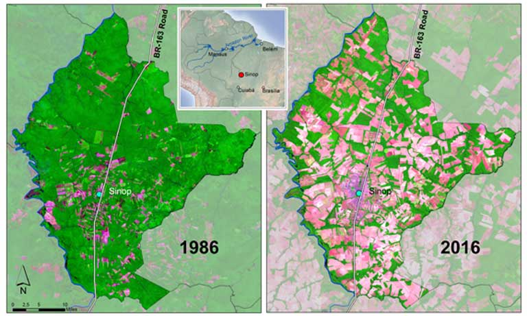 Battle for the Amazon As Sinop grew the Amazon rainforest faded away