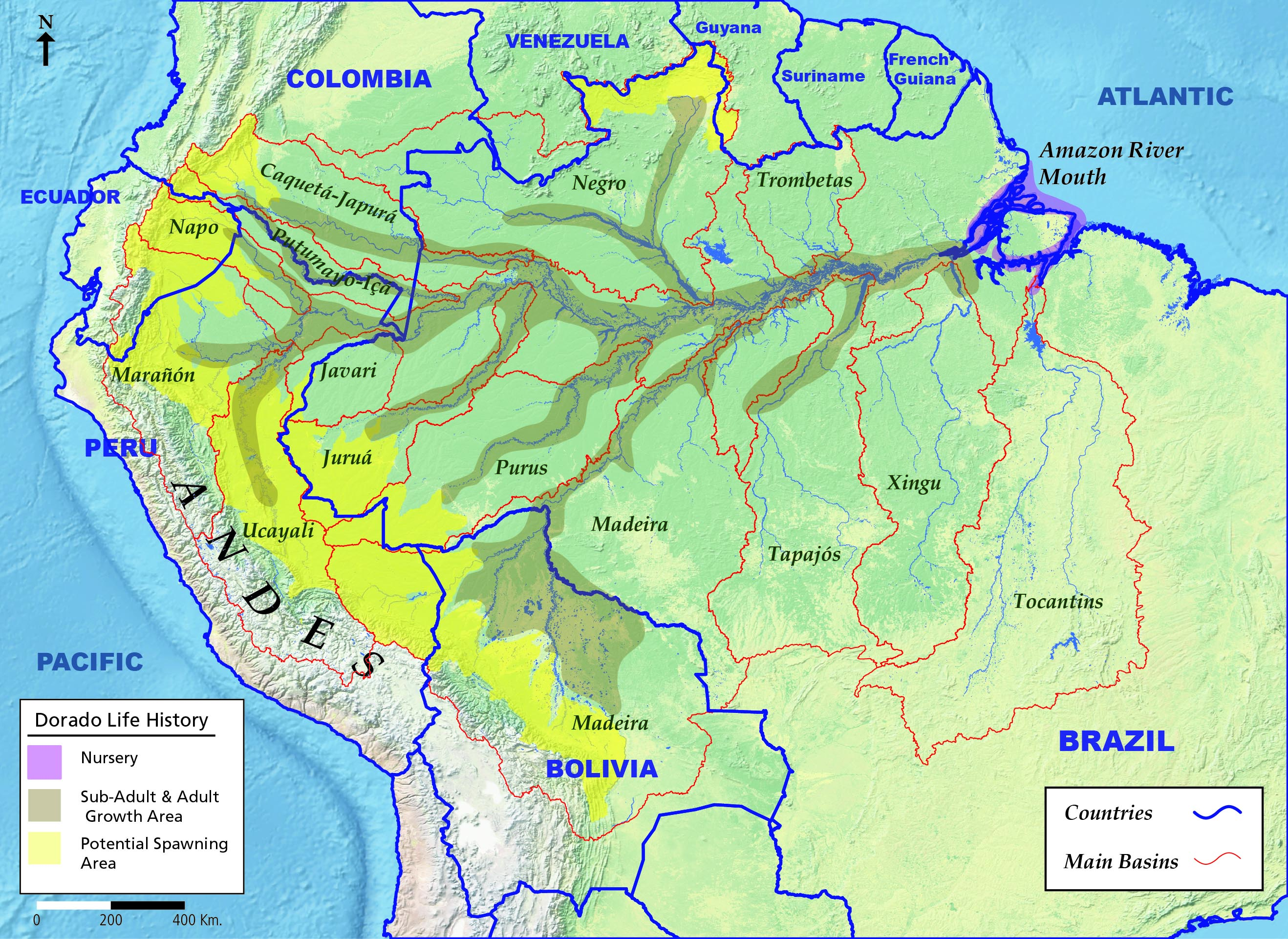 Giant catfish clocks longest ever freshwater migration map of the dorado catfishs life cycle migration through the amazon river basin map courtesy of wcs gumiabroncs Gallery