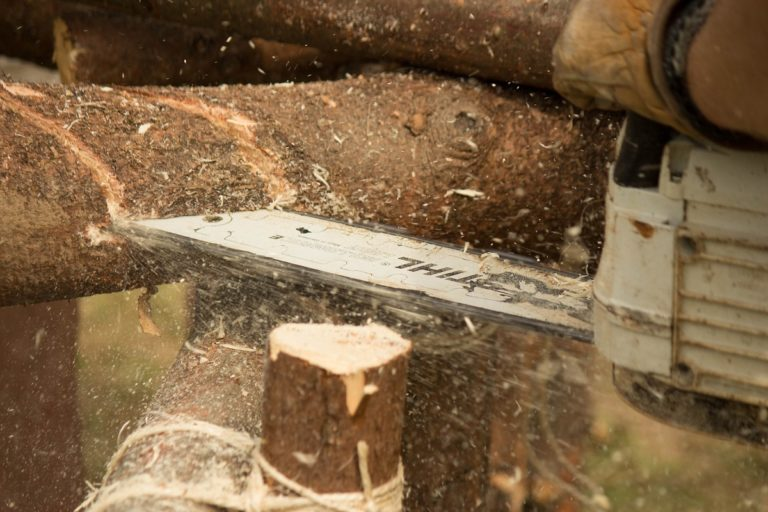 A chainsaw cuts through a tree. Photo by Mark Franckart/Pixabay