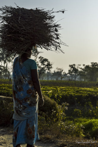 An Adivasi women carrying firewood collected from the park. Photo by M. Kundal Bora.
