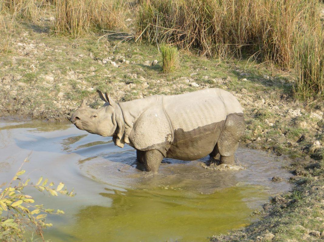 India's Manas National Park illustrates the human dimension