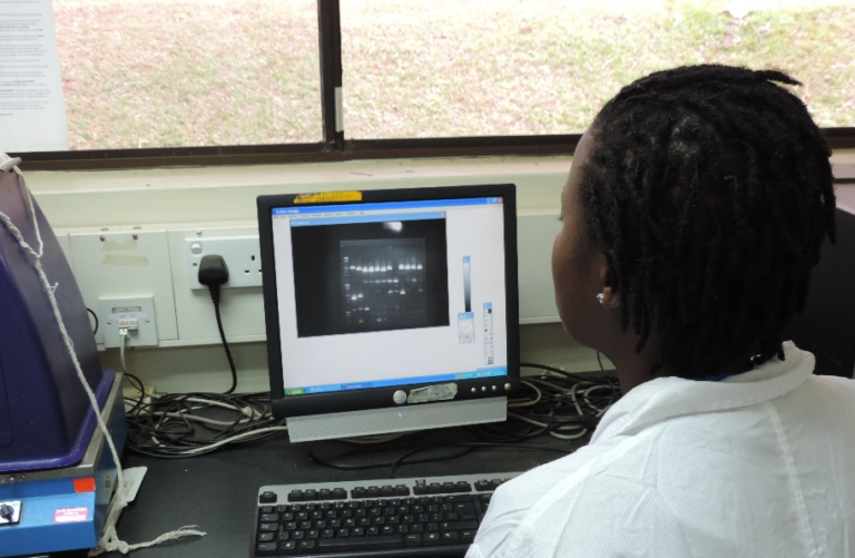 A researcher with the BWP in Kenya analyzes the results of the polymerase chain reaction (PCR) process.