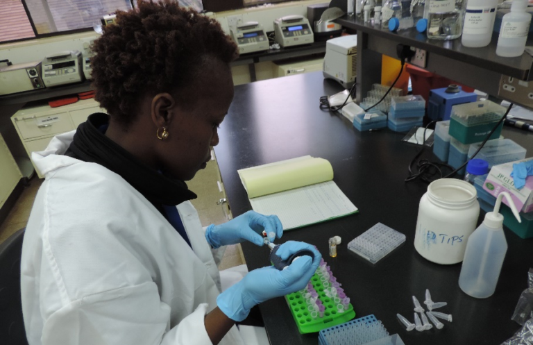 A researcher with the BWP in Kenya works on DNA extraction.