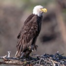 Endangered species and habitats threatened by US-Mexico border wall