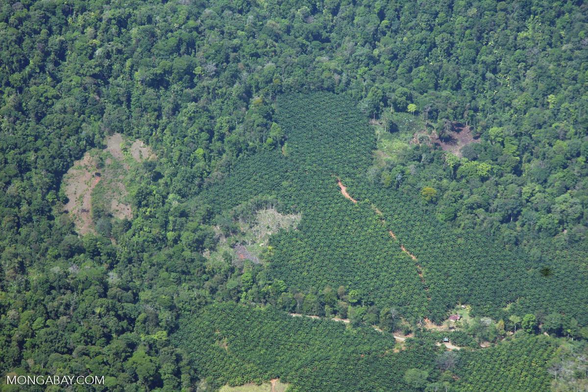 Costa Rica Deforestation