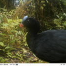 Camera traps proving to be powerful tool for studying endangered species in remote locations