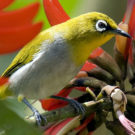 Singapore's wild bird trade threatens exotic species