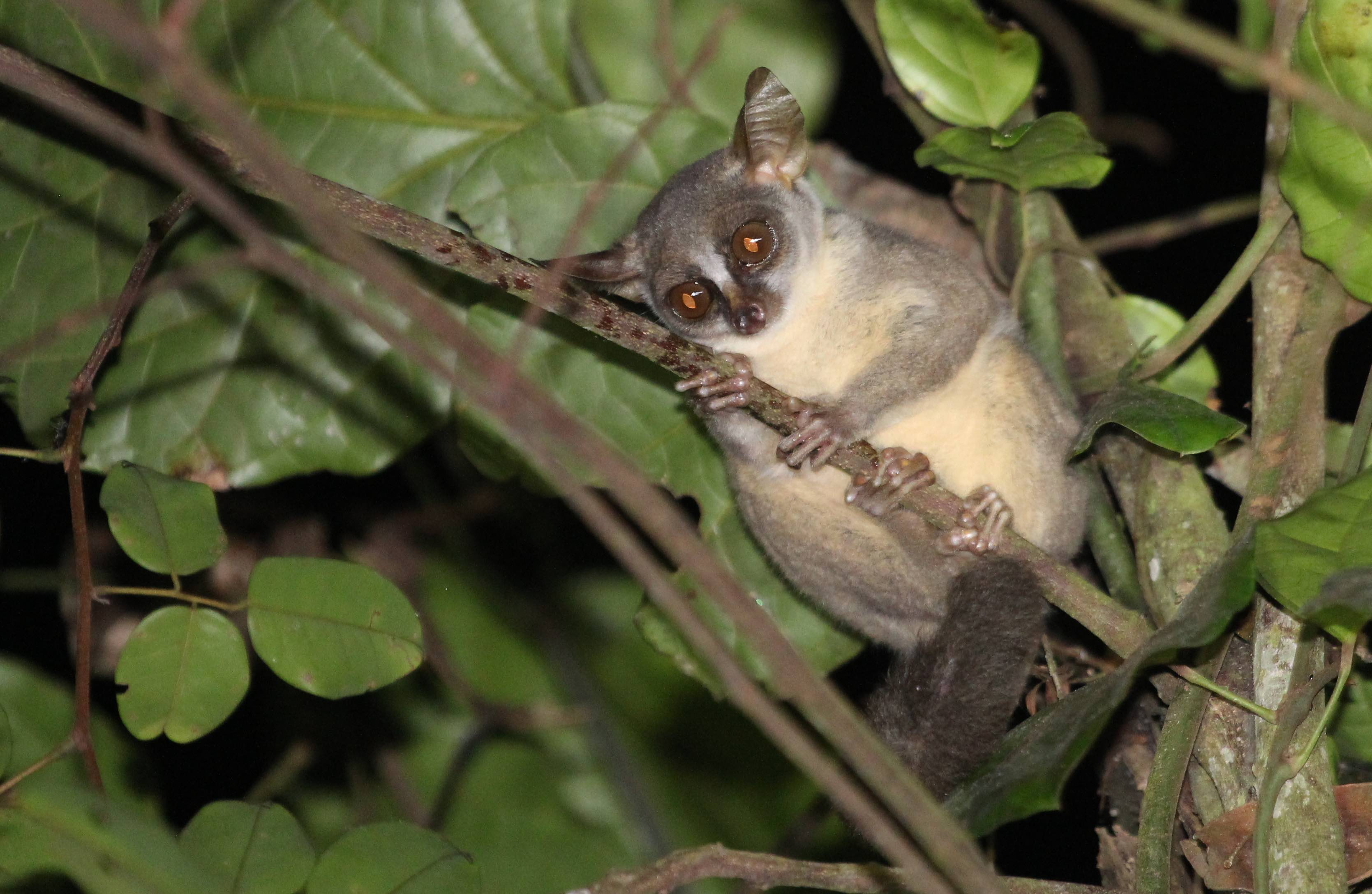 New species of animals discovered in 2017