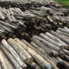 Study finds more than 350k trees illegally felled in Madagascar's protected areas in five-year span
