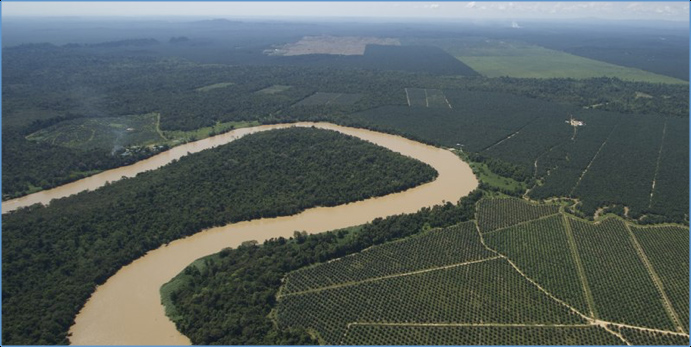 Picture: Aerial view of the Kinabatangan area in Sabah showing oil palm and partial river corridors. Full forest connectivity is crucial to allow wildlife to move through these multifunctional landscapes. Photo by Marc Ancrenaz.