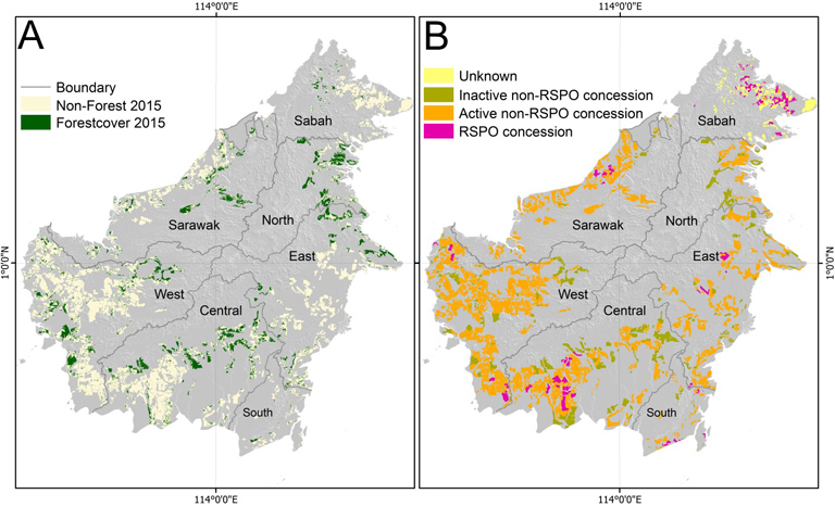 Map: All industrial-scale oil palm concessions on Borneo, their land cover, and their status (RSPO; active non-RSPO; non-active non-RSPO)