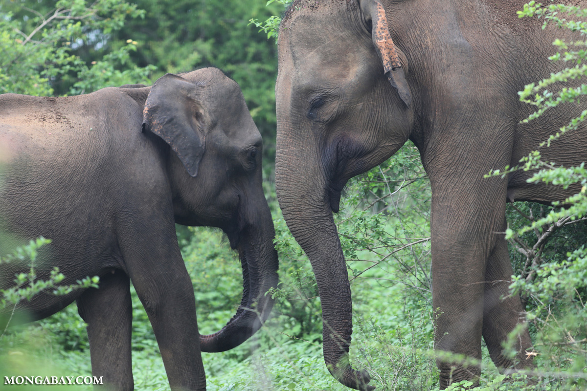 Electric Fence For Cattle >> Nepal tests fencing approach to protect farms and elephants