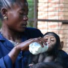 Women could be a key to great ape conservation in the Congo