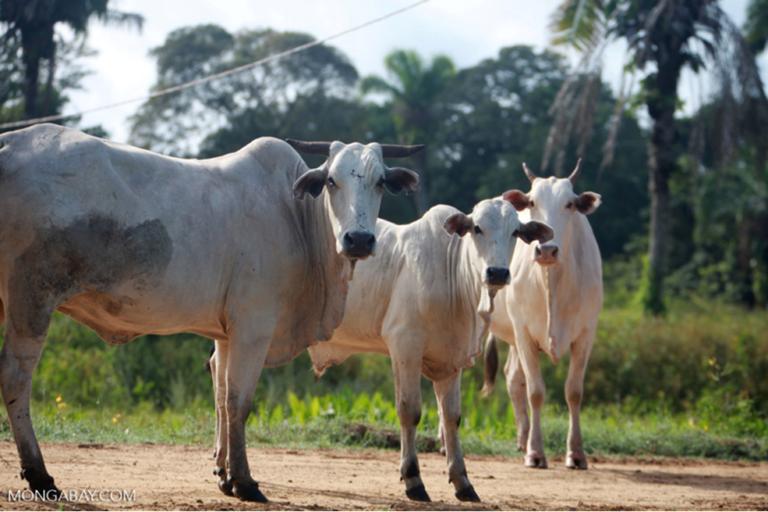 New beef scorecard measures brands against their deforestation promises