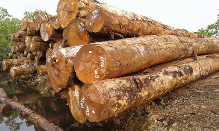 Corruption Drives Dealings With Logging Companies In The