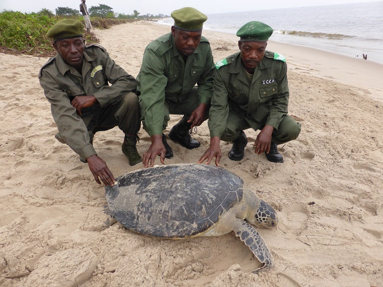 Park rangers pose with an olive ridley turtle in Mangrove Marine Park in 2015. Photo courtesy of Marcel Collet.