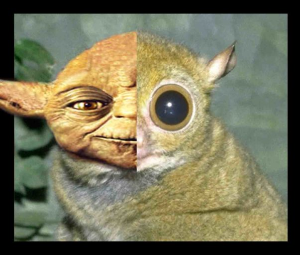 Two new species of tarsier, rumored to be inspiration for Yoda