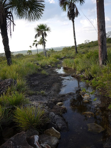 A river through the flatland plains near San José del Guaviare. Photo by Laura Dixon for Mongabay.