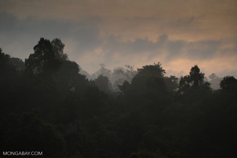 A forest in Cambodia. Photo by Rhett A. Butler.