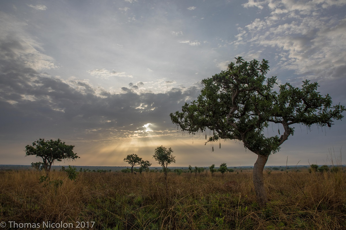 The landscape of Garamba National Park in DRC. Photo by Thomas Nicolon for Mongabay.