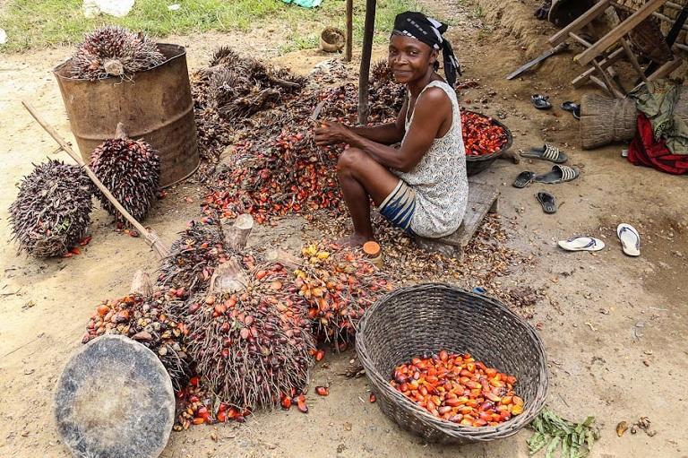Palm oil nuts in Liberia. Photo via Wikimedia Commongs/Antoshananarivo