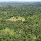 Liberian tropical forest. Image via USAID